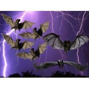 Decoración Murciélagos